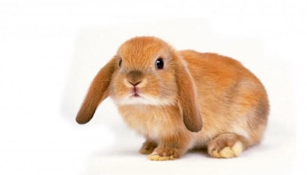 Вчені знайшли залишки предка кроликів, що жив 14 мільйонів років тому