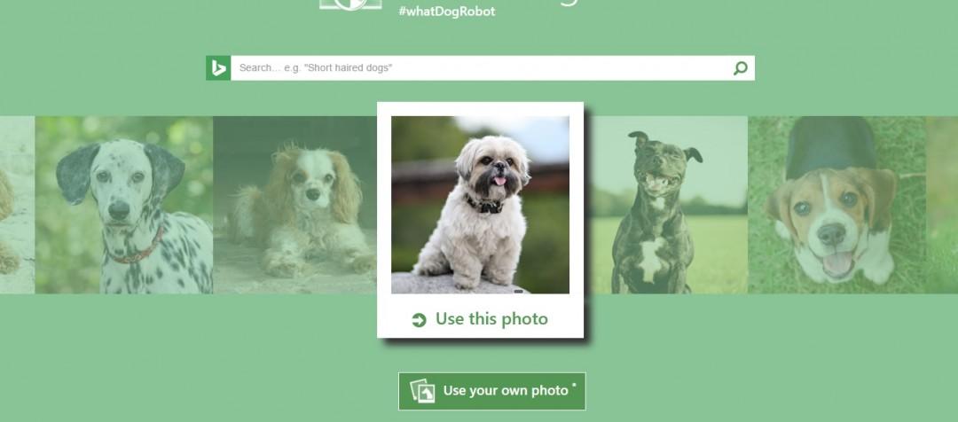 Microsoft навчила програму розрізняти породи собак