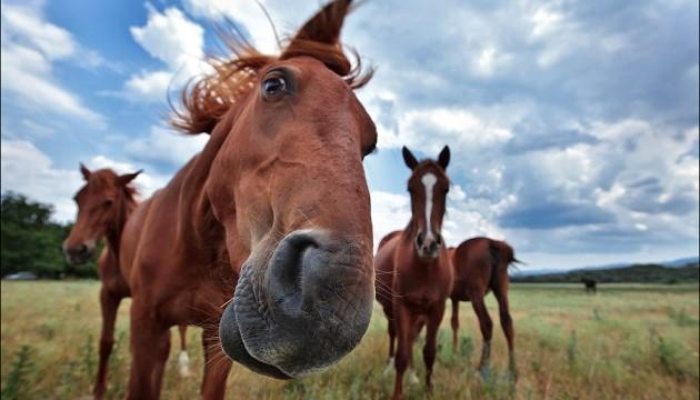 Коні вміють «читати» людські емоції – вчені