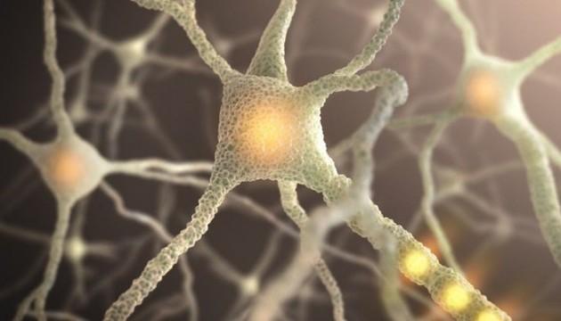 Вчені розробили технологію лазерного зварювання нейронів один з одним