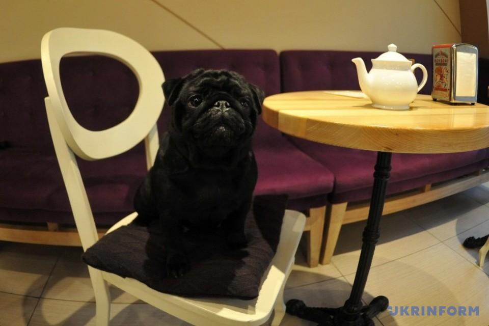 У Києві з'явилося кафе для відвідувачів із собаками / Фото: Худякова Олена. Укрінформ