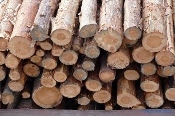 У Чернівцях вимагали збереження мораторію на експорт лісу