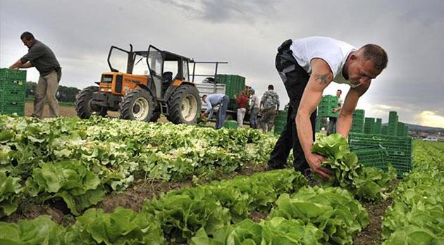 Фото: www.agriacta.com