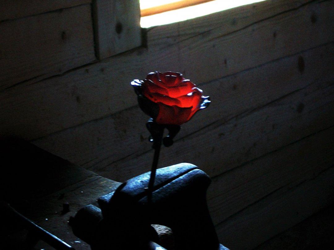 Щойно викована троянда у кузні Якова Франка