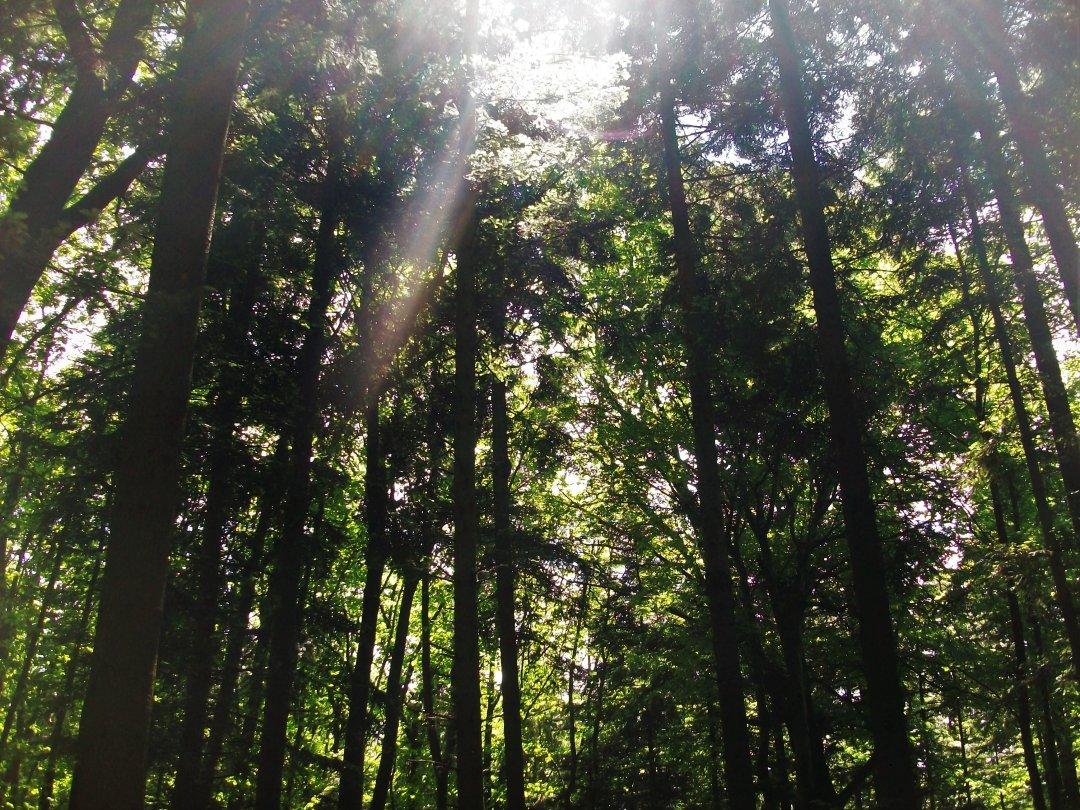 Лісова алея