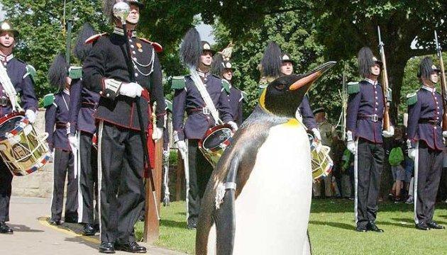 У Норвегії пінгвін став бригадним генералом
