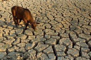Чому зникає вода на Прикарпатті?
