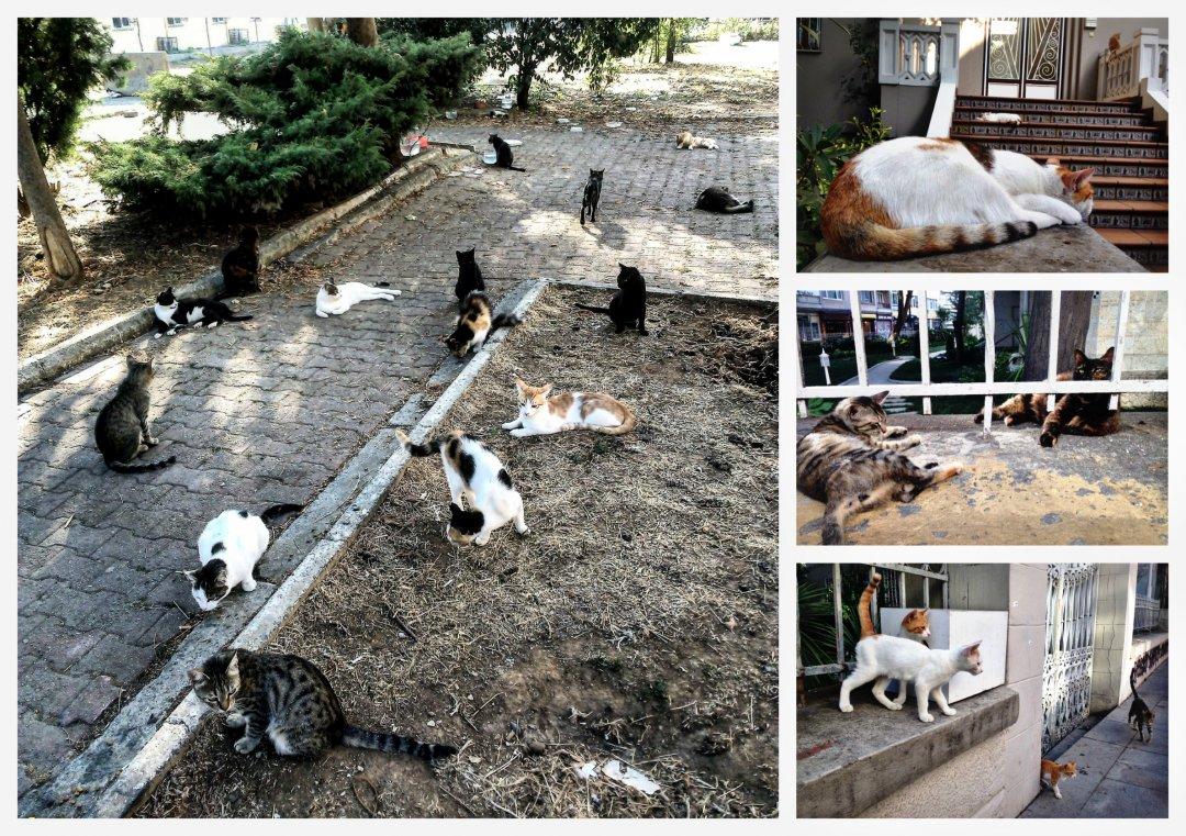 Коты Турции. И так каждые сто метров.