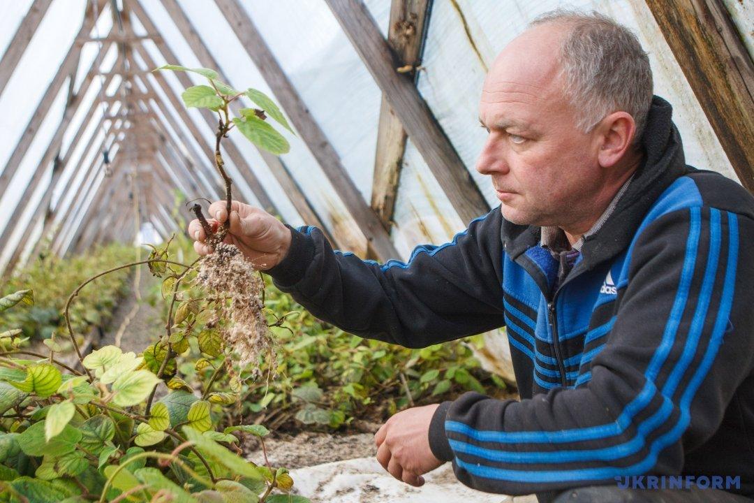 Выращивание в украине 33