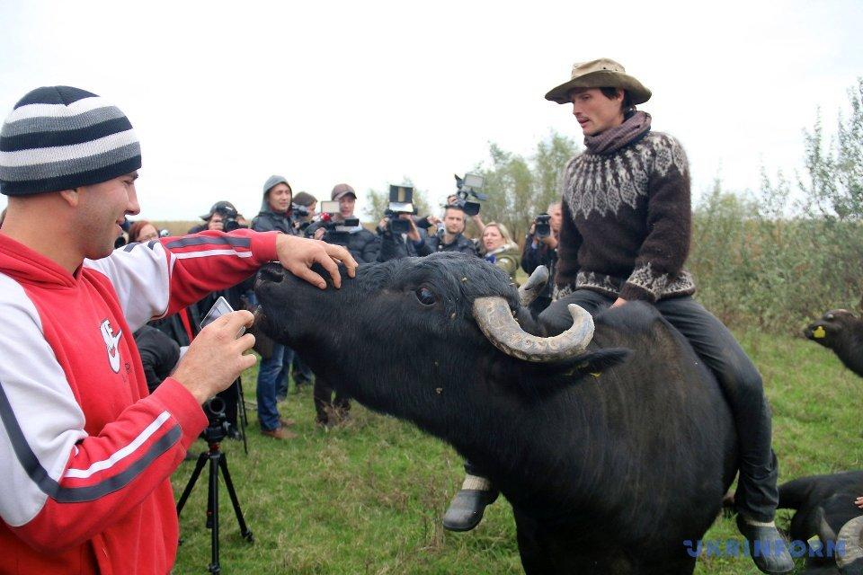 В Одесскую область экологи привезли экспериментальное стадо буйволов / Фото: Сергей Ляшонок, Укринформ.