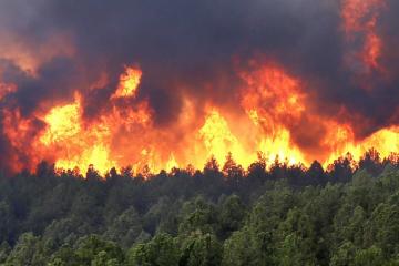 Лісова пожежа в Теннессі: загиблих вже 13, тисяча будинків знищені