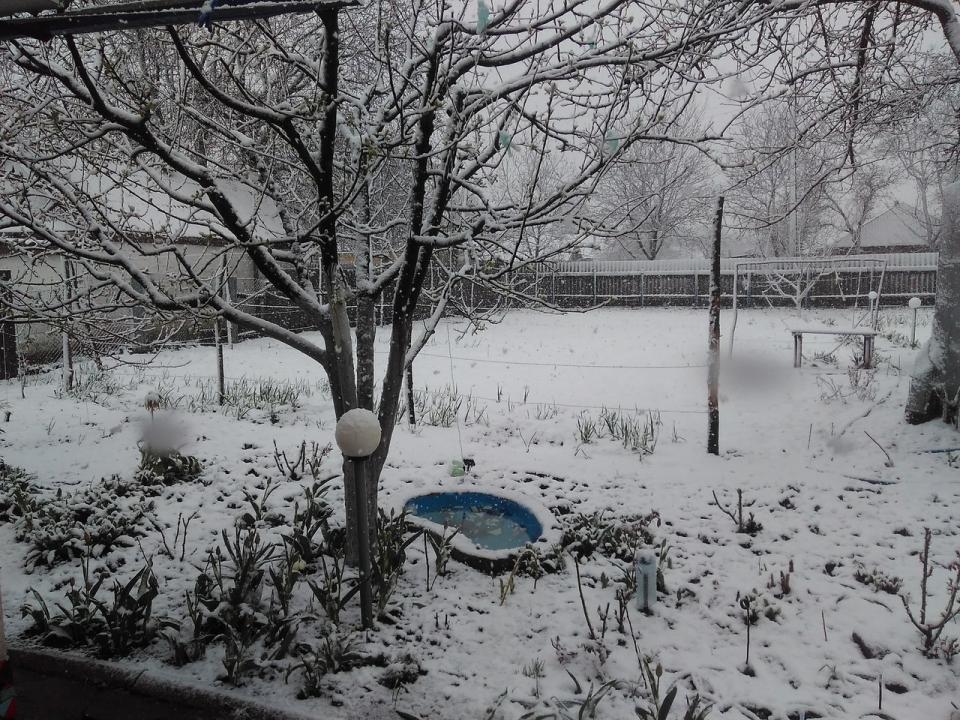 ВХарькове из-за снега задерживают рейсы, повсему городу повалены деревья