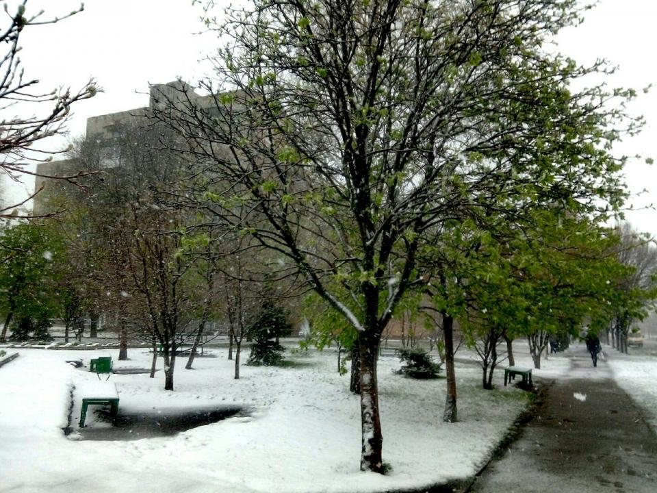 ВХарькове из-за снега задерживают рейсы , повсему городу повалены деревья
