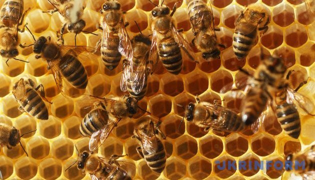 Ukrainian-Austrian honey factory opened in Cherkasy region