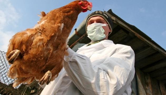 У Китаї припиняють торгівлю курятиною через пташиний грип
