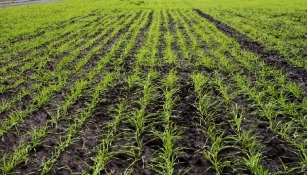 Інститут рису НААН України презентував нові технології вирощування