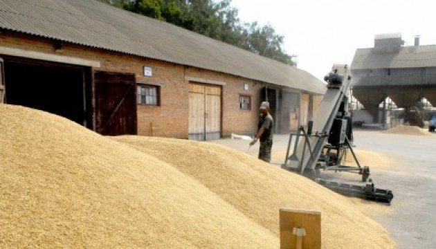Agrarian Policy Ministry: 52.5 mln tons of grain and leguminous crops harvested in Ukraine