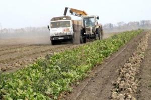 Ukraine completes sugarbeet harvest