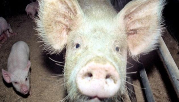 Вірменія вслід за Білоруссю заборонила імпорт української свинини