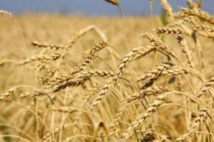 Ukrainian farmers already gathered 36M tonnes of grain - Economy Ministry
