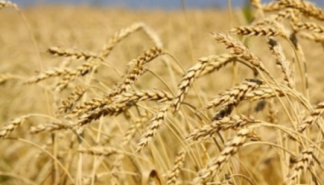 Ukrainian farmers already gathered 36M tonnes of grain - Economy Ministry