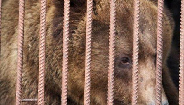 Во Львове запретили передвижные зверинцы и цирки