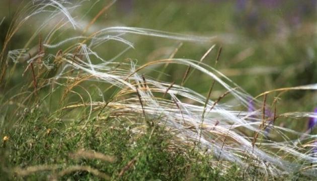 На Херсонщині з'явиться Національний природний парк «Кам'янська Січ»