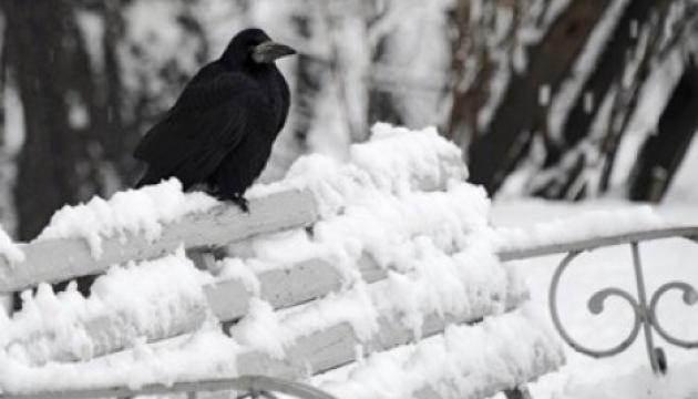 Погода на 26 січня: буде без опадів, подекуди мороз посилиться до 21°С