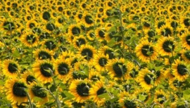 Выращивание подсолнечника является самым рентабельным в сельском хозяйстве - Минагро