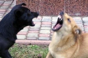 У Миколаєві жінка, яку покусав скажений пес, вимагає пів мільйона компенсації
