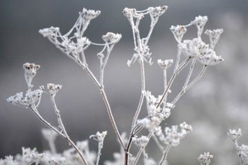 Frosts expected in Ukraine on Wednesday – State Emergency Service
