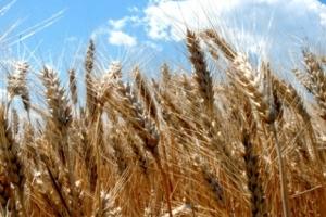 Eksport zboża przekroczył 3 mln ton - Ministerstwo Polityki Agrarnej