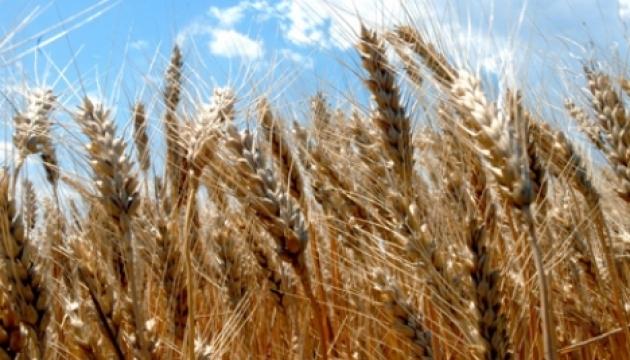 Україна вичерпала річну квоту на експорт пшениці до країн ЄС