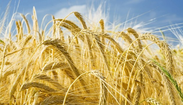 U.S. worsens forecast for wheat harvest in Ukraine