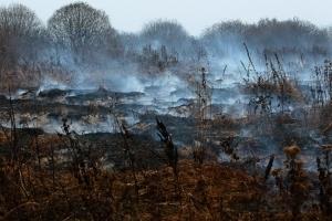 У трьох районах на Полтавщині майже на 50 гектарах горять торфовища