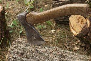 На Харківщині керівники держлісгоспу розкрали деревини на понад 6 мільйонів