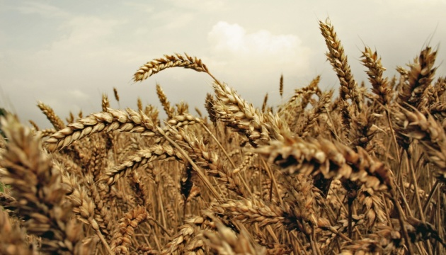 Iran interested in increasing imports of Ukrainian agricultural products