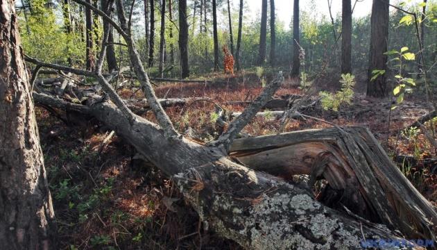 Незаконні рубки лісу в Україні зменшилися на 46%