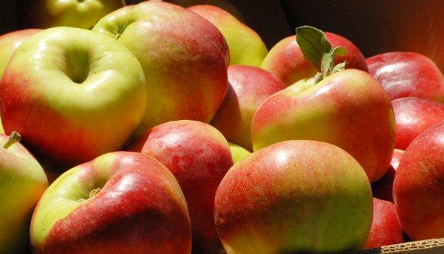 Яблуками з Тернопільщини зацікавилися на виставці фруктової логістики в Берліні