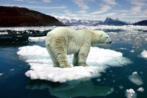 Изменения климата — какие шансы, есть ли выход?