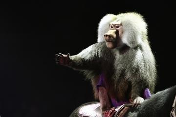 Le ministère de l'Écologie ukrainien a  décidé d'interdire l'utilisation d'animaux sauvages dans les cirques ukrainiens