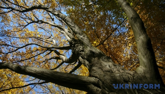 Українцям обіцяють ясну погоду