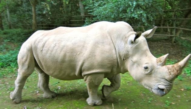 Во Франции браконьеры убили белого носорога прямо в зоопарке