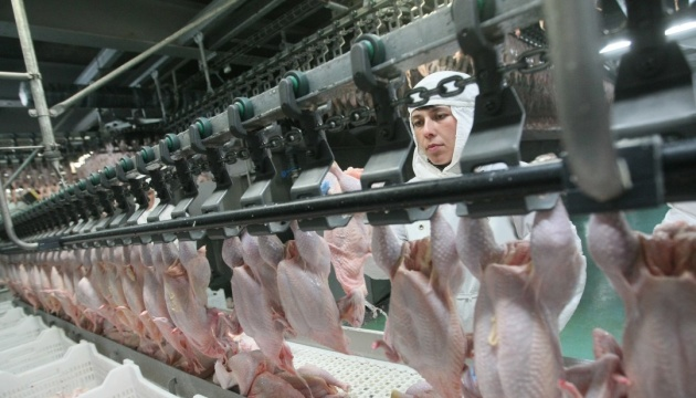 Украина вошла в тройку крупнейших экспортеров курятины в ЕС