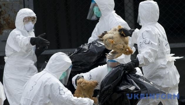 У Японії знищать тисячі курей через спалах пташиного грипу
