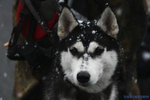 """Одразу після """"бабиного літа"""" Україну може накрити мокрий сніг"""