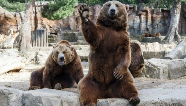 https://static.ukrinform.com/photos/2015_12/thumb_files/630_360_1449851496-1891-zoopark-skazka.jpg