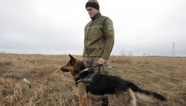 Прикордонний пес вистежив гвінейців, що потемки кралися в Угорщину