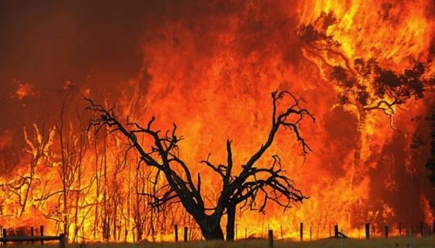 Прошлогодние пожары в Австралии уничтожили более сотни местных видов растений