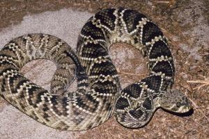 На Прикарпатті дитина потрапила до реанімації через укус змії